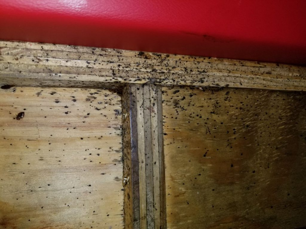 bed bugs in restaurant